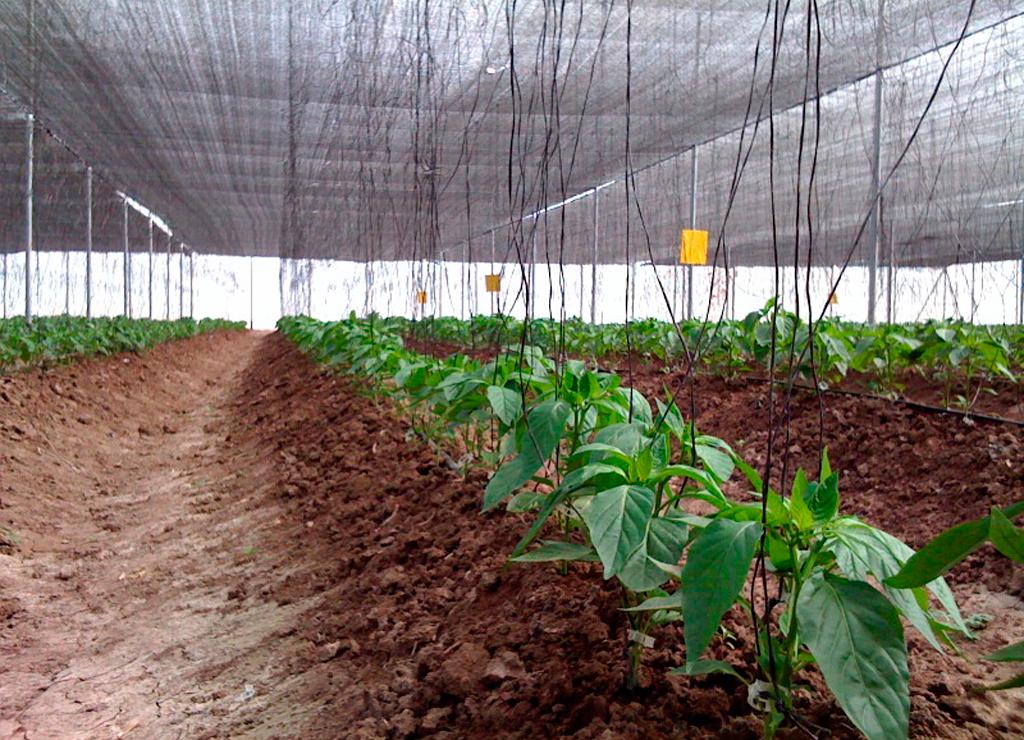 Buscometro cliente malla sombra de los mochis for Construccion de viveros e invernaderos